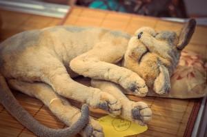 """Мишки Тедди. Выставка """"Салон кукол"""" - 2014. Фото 40."""